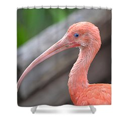 Scarlet Ibis 1 Shower Curtain by Richard Bryce and Family