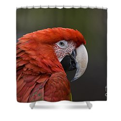 Shower Curtain featuring the photograph Scarlet Macaw by David Millenheft