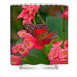 Scarlet Swallowtail Butterfly On Crown Of Thorns Flowers Shower Curtain