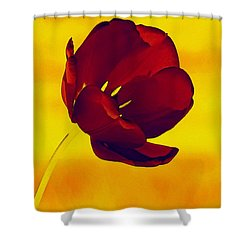 Scarlet Tulip At Sunset Shower Curtain