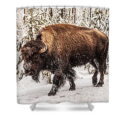 Scary Bison Shower Curtain by Sue Smith