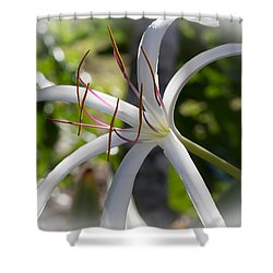 Spider Lilly Flower Shower Curtain