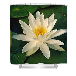 Scented Pond Lily Shower Curtain