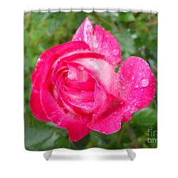 Shower Curtain featuring the photograph Scented Rose by Ramona Matei
