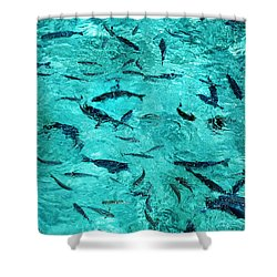 School Of Fishes In The Transparent Water Shower Curtain by Jenny Rainbow