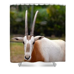 Scimitar Horned Oryx 2 Shower Curtain by Richard Bryce and Family