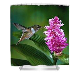 Scintillant Hummingbird Selasphorus Shower Curtain by Michael and Patricia Fogden