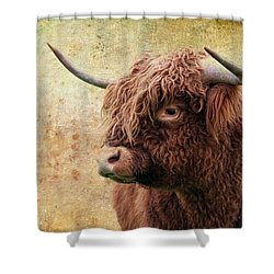 Scottish Highland Steer Shower Curtain