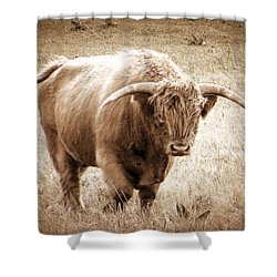 Scottish Highlander Bull Shower Curtain by Karen Shackles