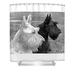 Scottish Terrier Dogs Black And White Shower Curtain by Jennie Marie Schell