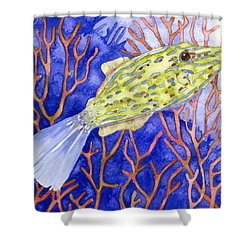 Scrawled Filefish Shower Curtain