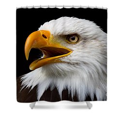 Screaming Bald Eagle Shower Curtain by Nick  Biemans
