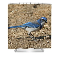 Scrub Jay Shower Curtain by Bob and Jan Shriner