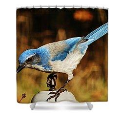 Scrub Jay Shower Curtain by VLee Watson