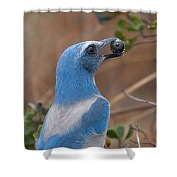 Shower Curtain featuring the photograph Scrub Jay With Acorn by Paul Rebmann