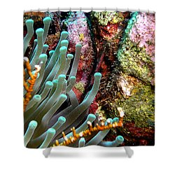 Sea Anemone And Coral Rainbow Wall Shower Curtain by Amy McDaniel