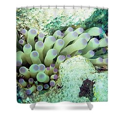 Sea Anemone With Squat Anemone Shrimp Family Shower Curtain by Amy McDaniel