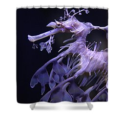 Sea Horse Shower Curtain by Donna Corless
