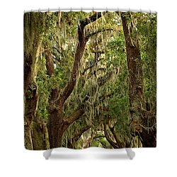Sea Island Oaks Portrait Shower Curtain