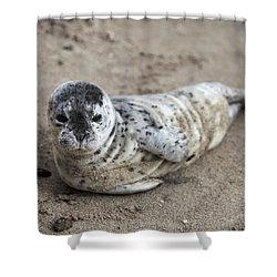 Seal Baby Shower Curtain by David Millenheft