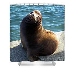 Shower Curtain featuring the photograph Sea Lion Basking In The Sun by Chalet Roome-Rigdon