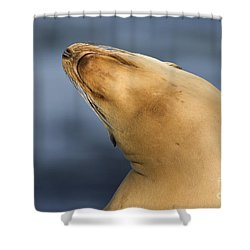 Shower Curtain featuring the photograph Sea Lion Stretch by Bryan Keil
