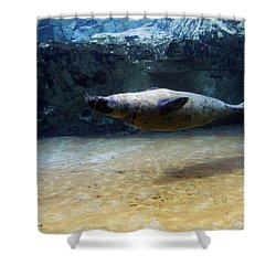 Shower Curtain featuring the photograph Sea Lion Swimming Upsidedown by Verana Stark