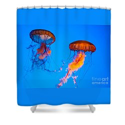 Sea Nettles Shower Curtain by Anthony Sacco