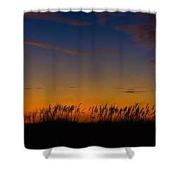 Sea Oats At Twilight Shower Curtain
