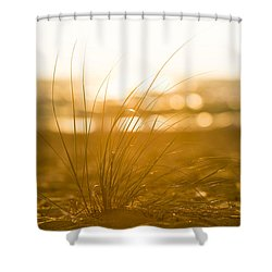 Shower Curtain featuring the photograph Sea Oats Sunset by Sebastian Musial