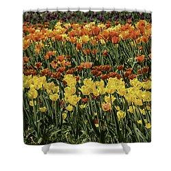Sea Of Tulips Shower Curtain by LeeAnn McLaneGoetz McLaneGoetzStudioLLCcom