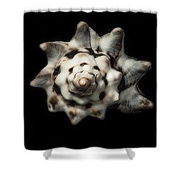 Sea Shell #1 Shower Curtain