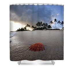 Sea Shell Sunrise Shower Curtain