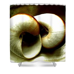 Sea Shells Meeting Shower Curtain by Colette V Hera  Guggenheim