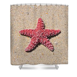 Sea Star - Red Shower Curtain by Al Powell Photography USA