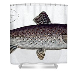Sea Trout Shower Curtain by Andreas Ludwig Kruger