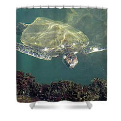 Sea Turtle Cabbage Shower Curtain