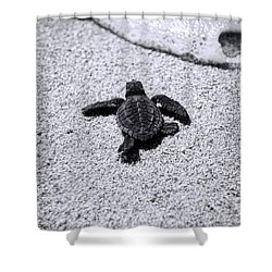 Sea Turtle Shower Curtain by Sebastian Musial