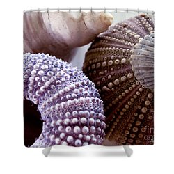 Sea Urchins  Shower Curtain by Colleen Kammerer