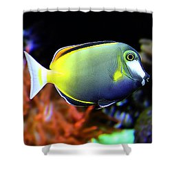Shower Curtain featuring the photograph Sea World by Milena Ilieva