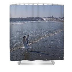Shower Curtain featuring the photograph Seagull 1 by Robert Nickologianis