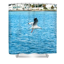 Seagull At St Kilda Shower Curtain by Yew Kwang