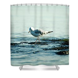Seagull Hunting Shower Curtain by Yew Kwang