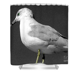 Shower Curtain featuring the photograph Seagull In Black And White by Nina Silver