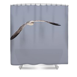 Shower Curtain featuring the photograph Seagull In Flight Against A Blue Sky by Charles Beeler
