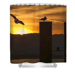 Shower Curtain featuring the photograph Seagull In The Sunset by Chevy Fleet