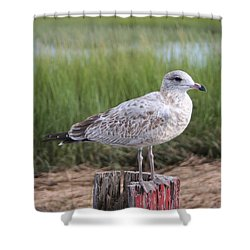 Shower Curtain featuring the photograph Seagull by Karen Silvestri