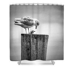 Seagull On Pier  Shower Curtain