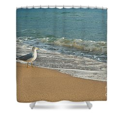 Seagull Walking On A Beach Shower Curtain by Sharon Dominick