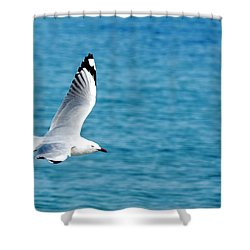 Seagull Shower Curtain by Yew Kwang
